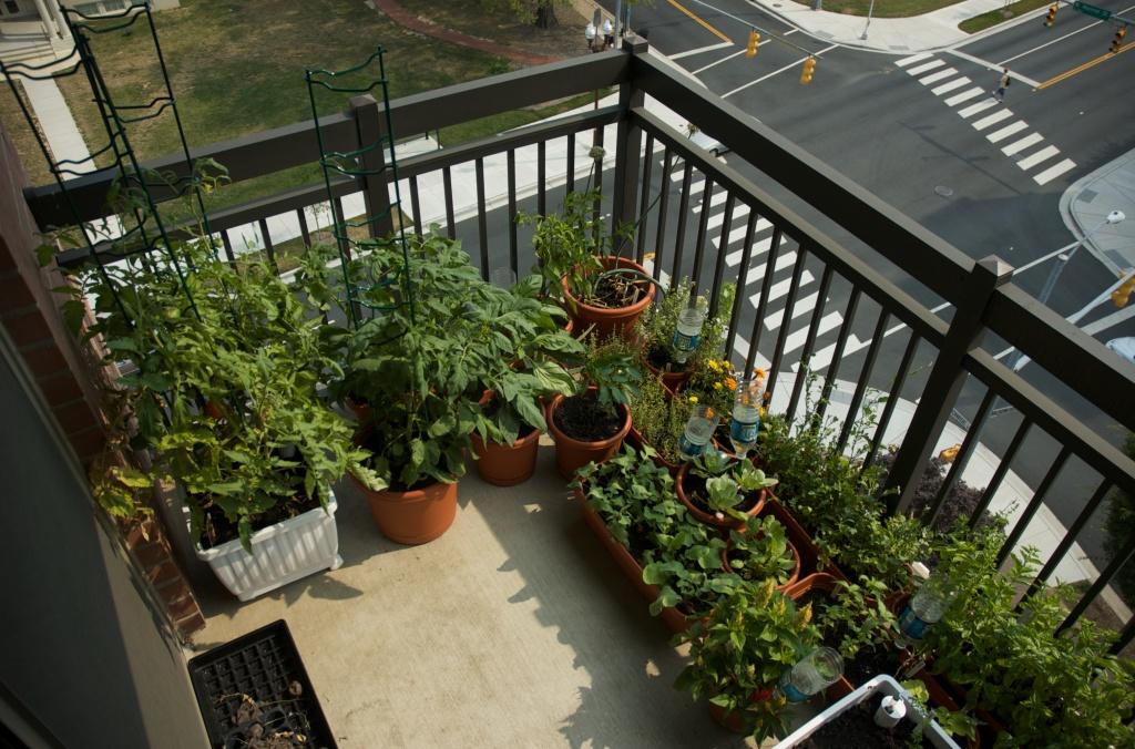 balcony-garden-ideas-in-dubai-best-balcony-design-ideas-latest-dubai-garden-balcony-l-e0fff7e1c05fd8ca.jpg